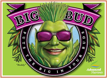 Advanced Nutrients Big Bud 10 L